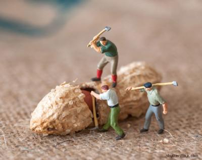 peanut-cracking-men-with-ax